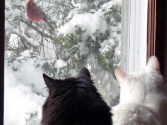 Cats watching birds