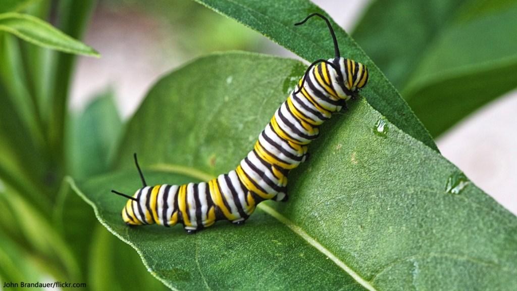 Little Caterpillar
