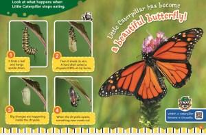 Little Caterpillar May 2018 RR Jr 2