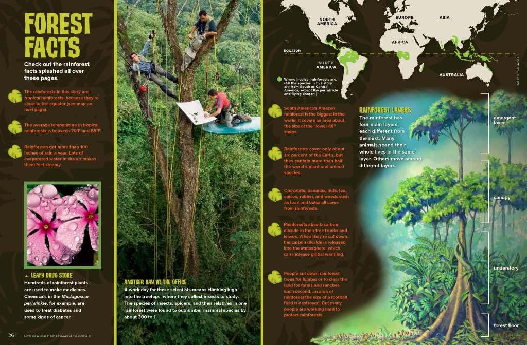 Ranger Rick Rainforest December January 2015 2