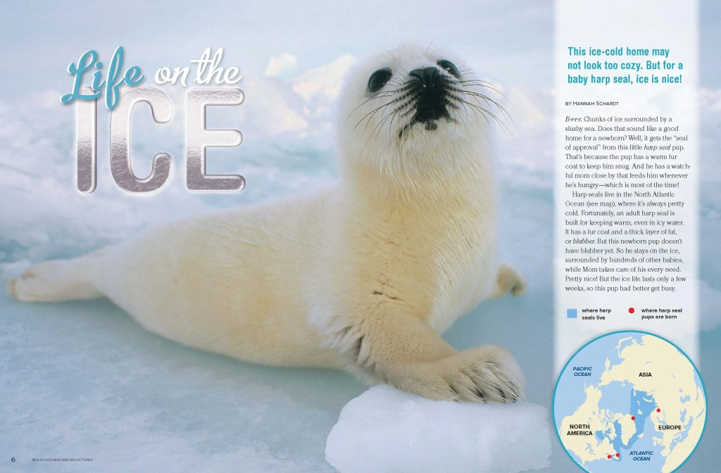 Ranger Rick Harp Seals February 2013 1