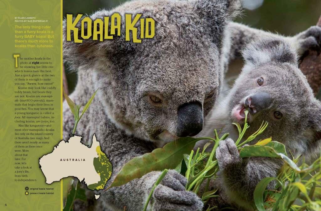 Ranger Rick Koala Kid February 2014 1