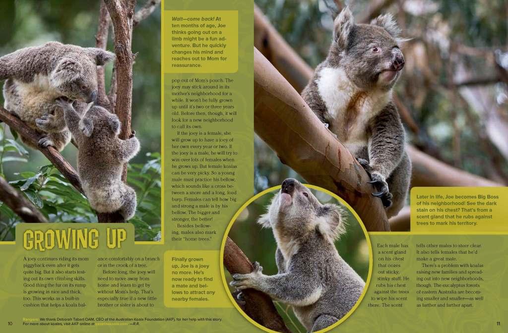 Ranger Rick Koala Kid February 2014 3