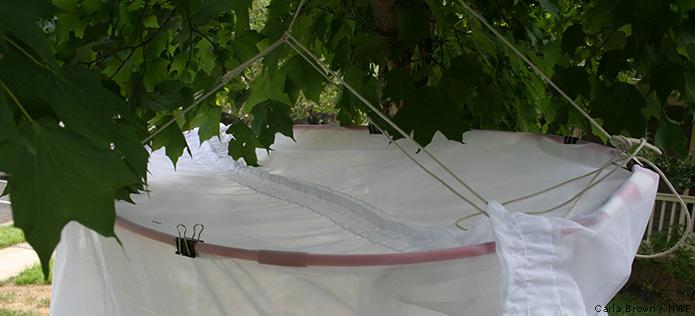 hoop structure net