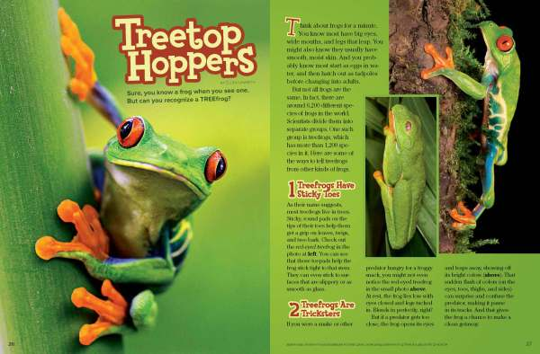 Ranger Rick Treetop Hoppers March 2014 1