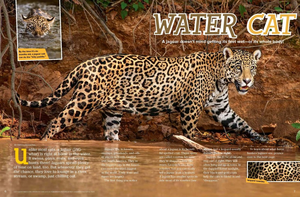 Ranger Rick Water Cat November 2014 1