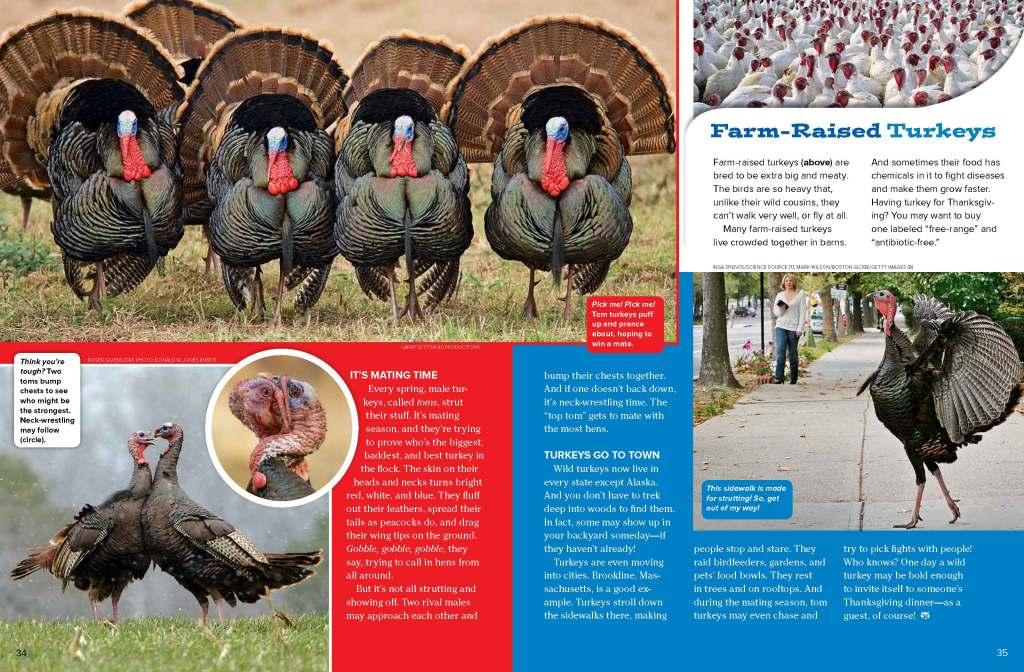 Ranger Rick Turkeys November 2014 2