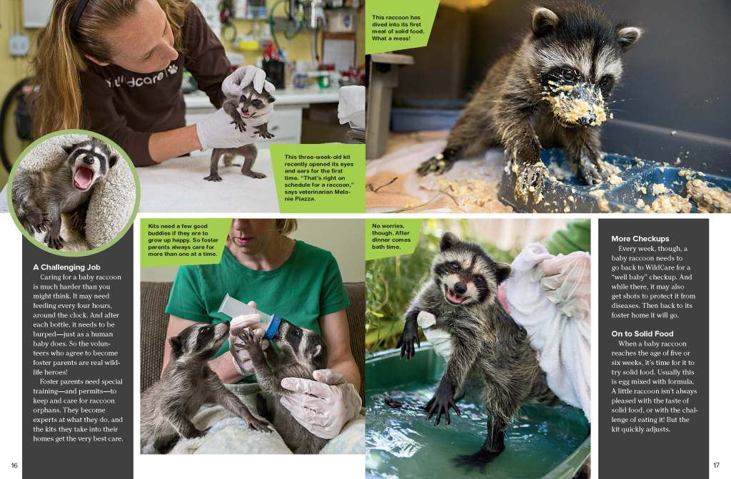 Ranger Rick Raccoon Rescue October 2014 2