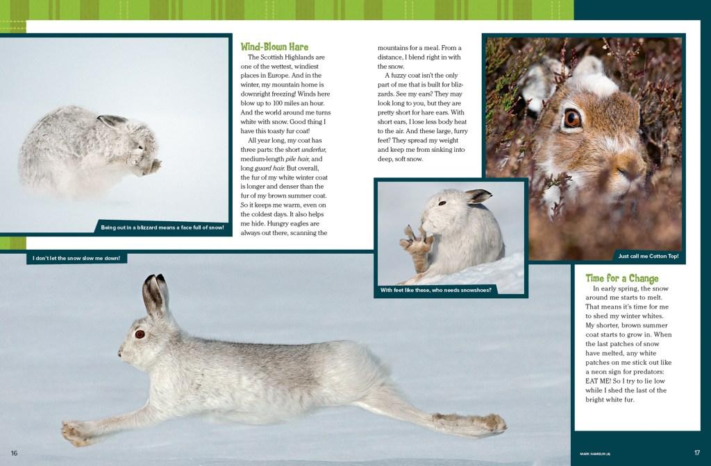 Ranger Rick Bunny March 2015 2