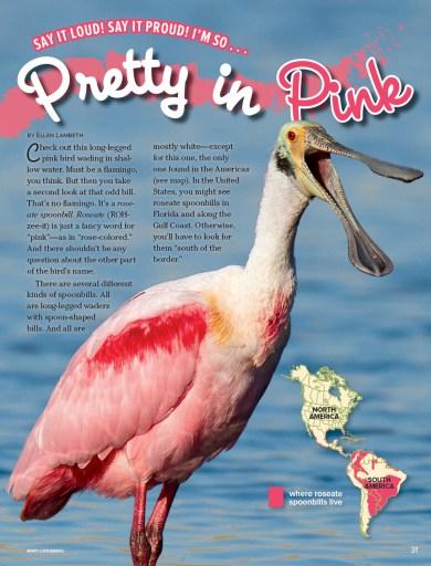 Ranger Rick Pretty in Pink May 2015 1