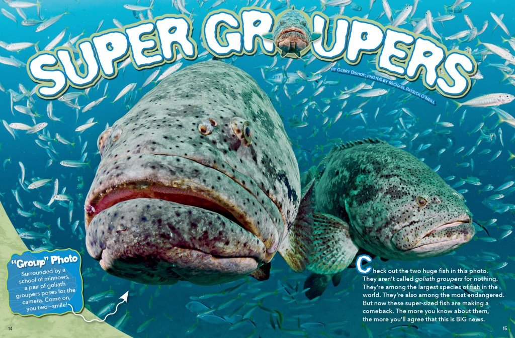 Ranger Rick Super Grouper November 2015 1