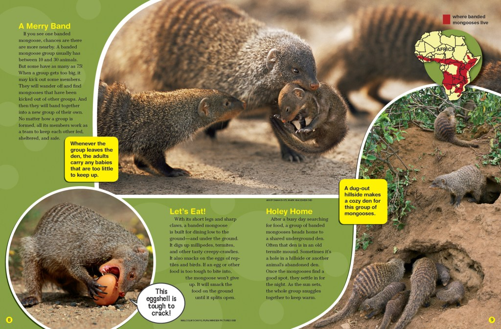 Ranger Rick Mongooses October 2015 2