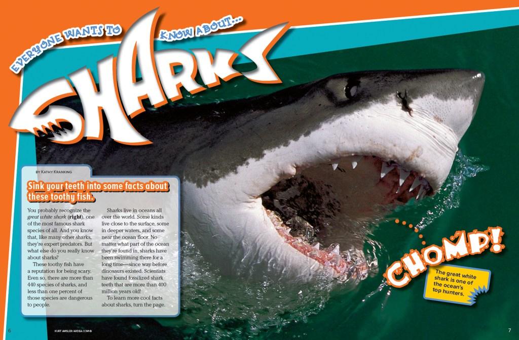 Ranger Rick Sharks June July 2015 1