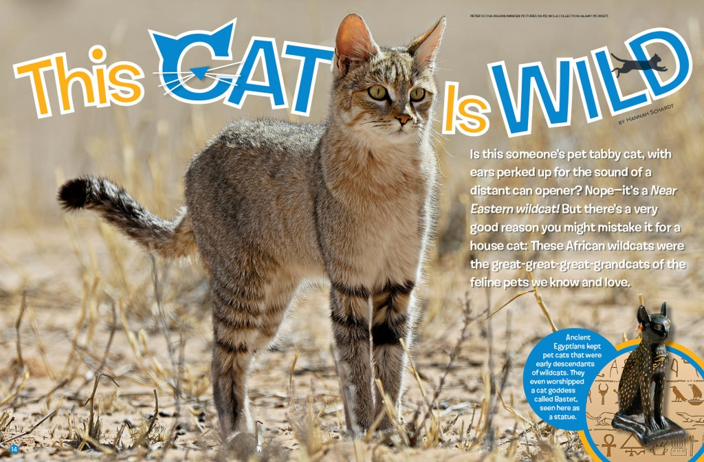 Ranger Rick Wild Cat February 2016 1