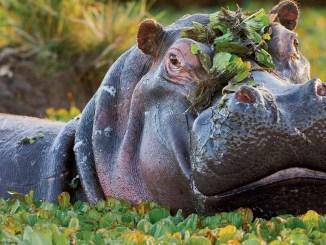 Ranger Rick Jr Happy Hippo June July 2014