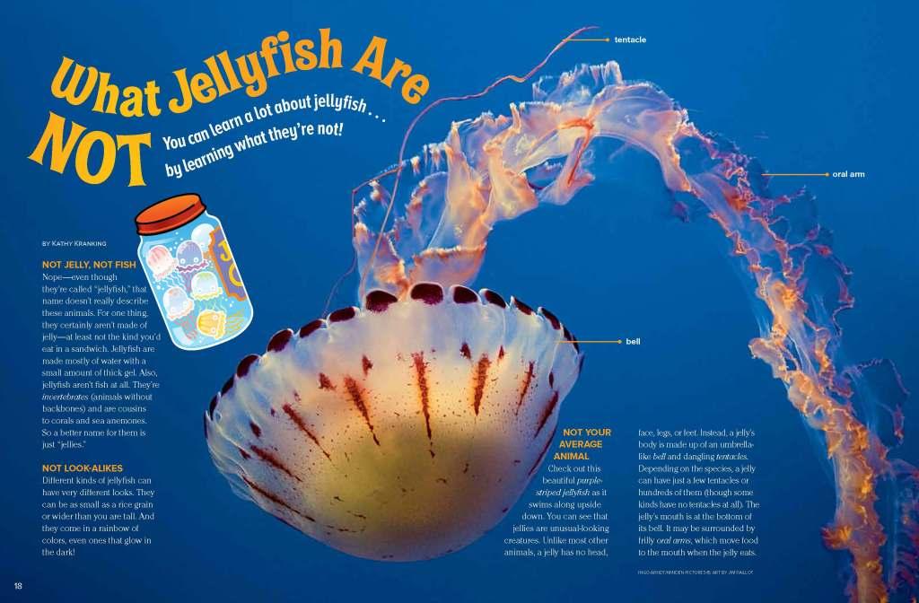 Ranger Rick Jellyfish June July 2013 1