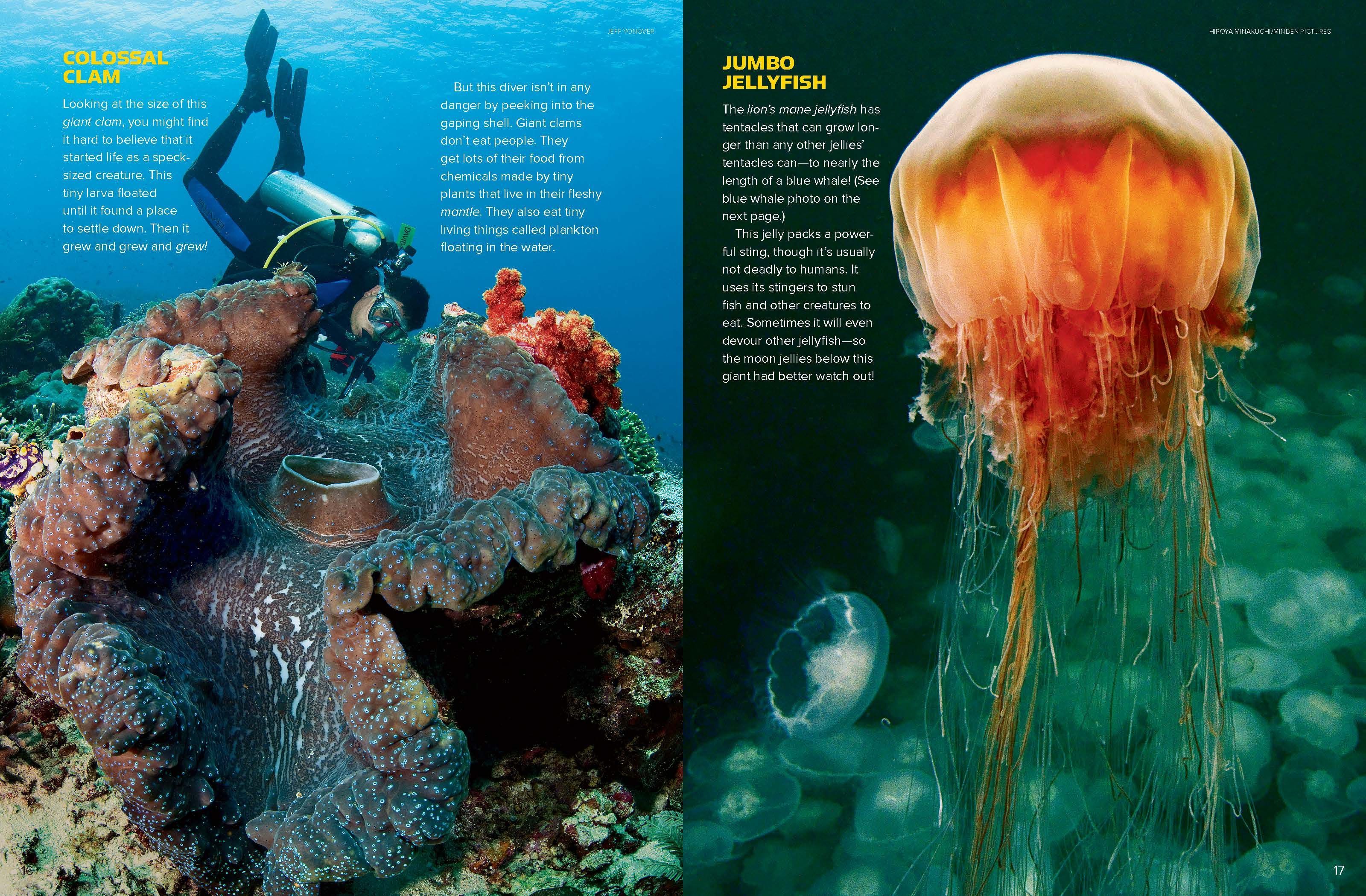 ocean giants nwf ranger rick