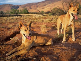 Year of the Dog Ranger Rick February 2018