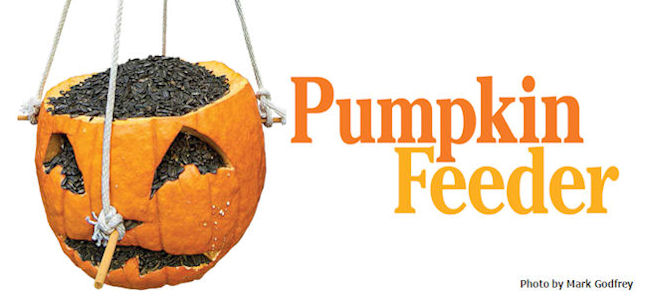 Pumpkin feeder