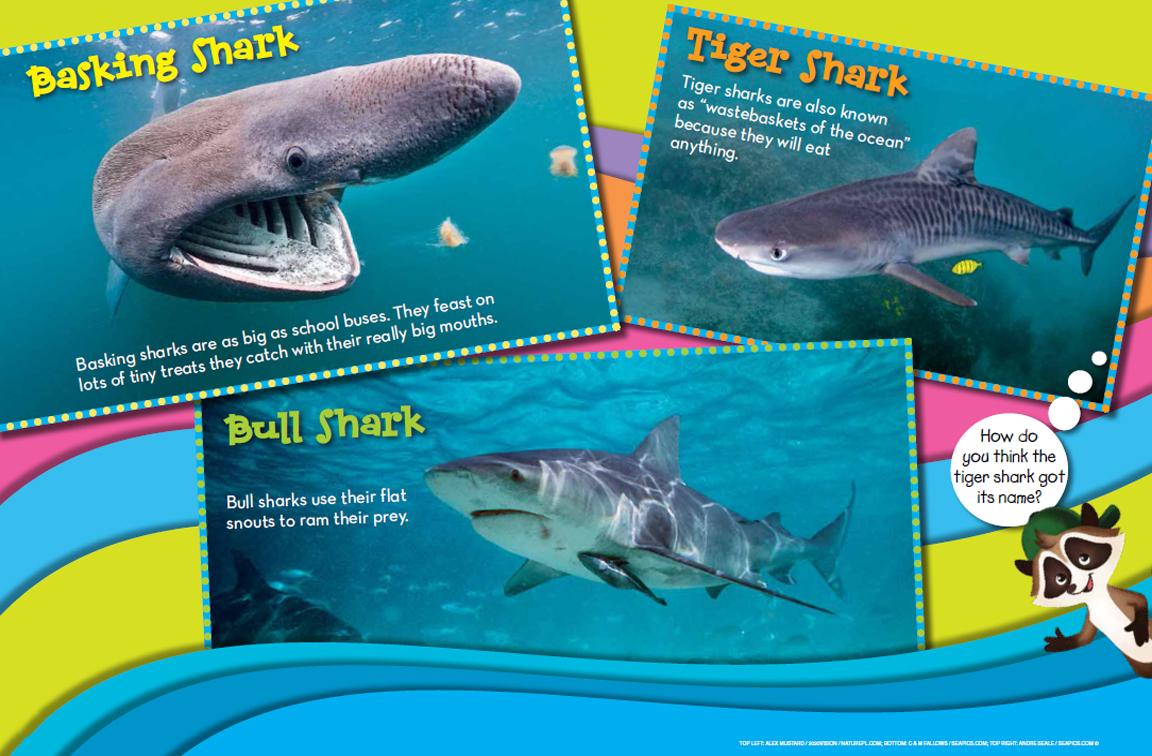 Sharks - NWF | Ranger Rick