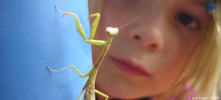 Praying Mantis by Carla Brown
