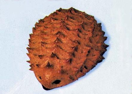 hedgehog biscuit