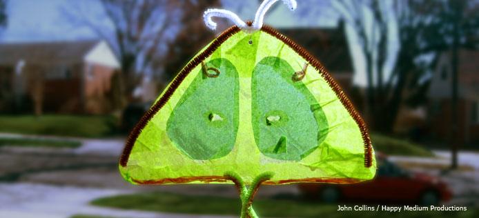 luna moth suncatcher