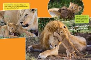 lion spread 3