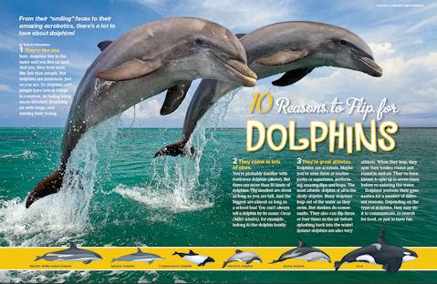 dolphins spread 1
