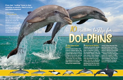 dolphins spread 1