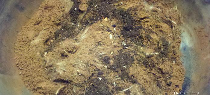 dry seed