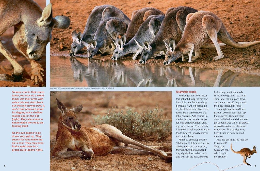red_kangaroo_page2