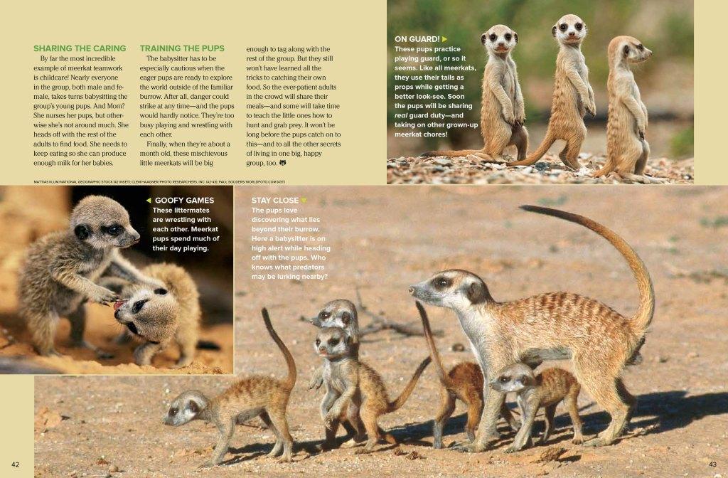 meerkats spread 3
