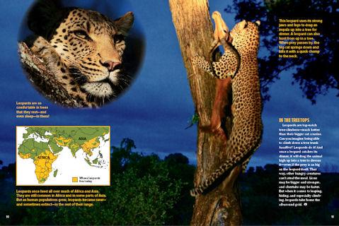 leopards spread 3