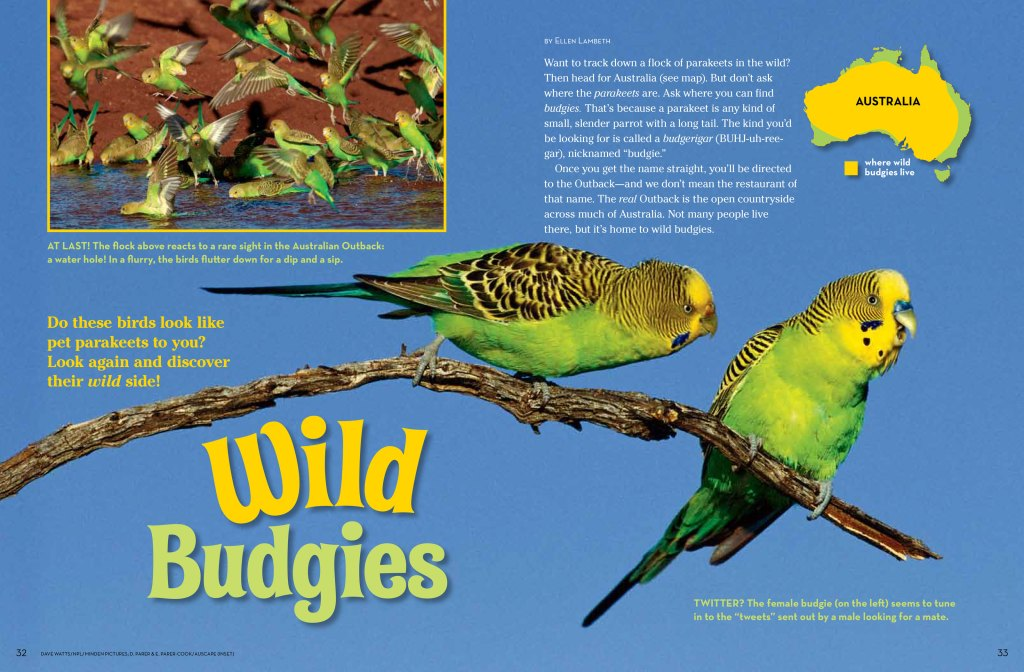 budgies spread 1