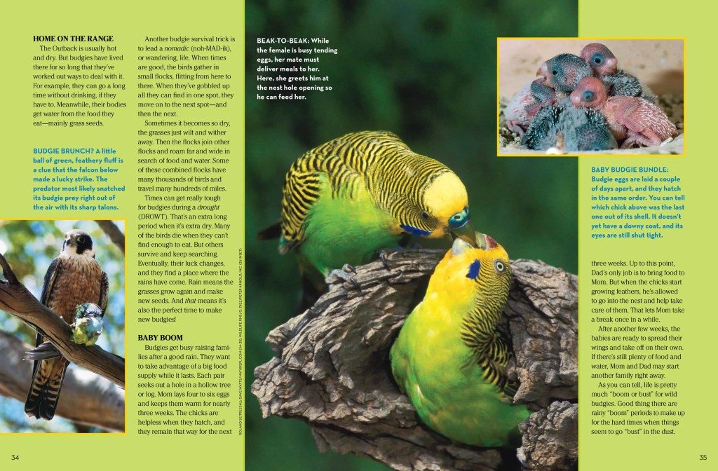 budgies spread 2