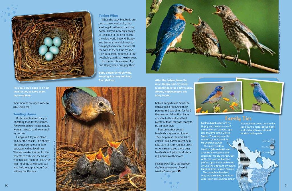 bluebird spread 2