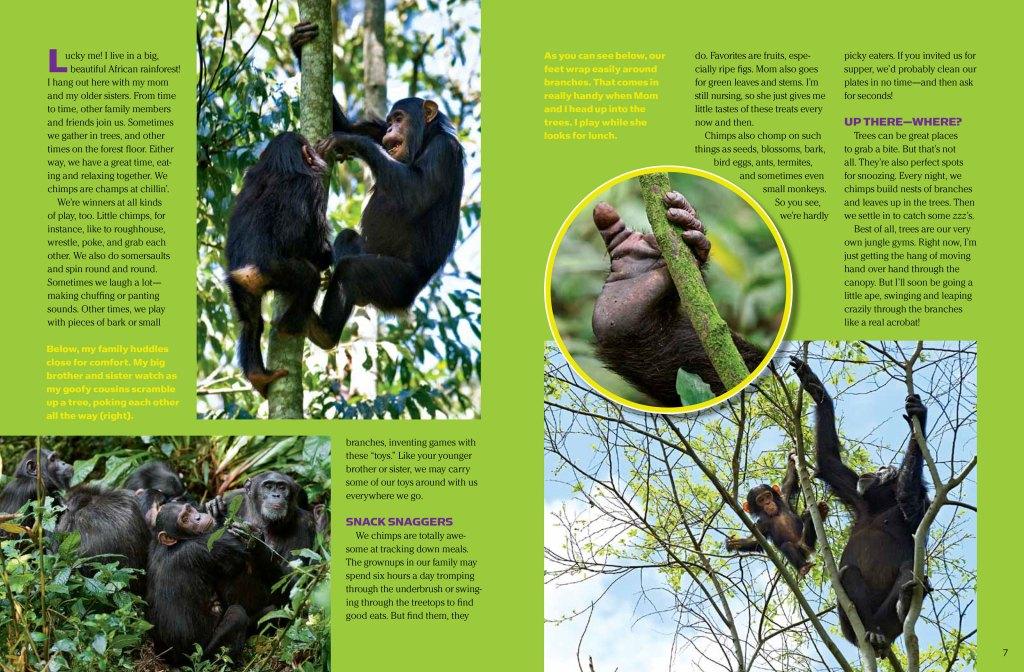 Chimps spread 2