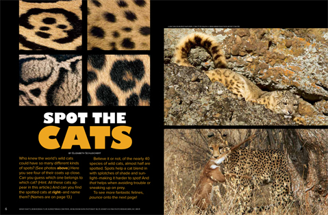 spread 1 spotted cats