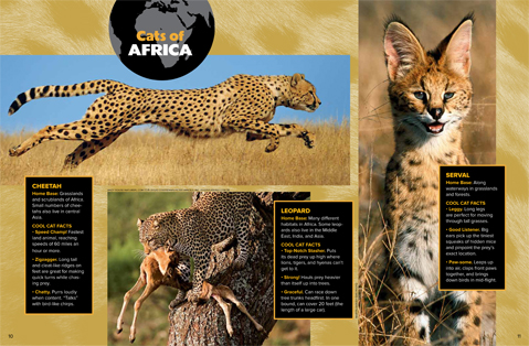spread 3spotted cats