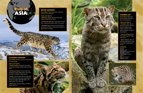 spread 4 spotted cats