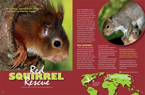 redsquirrel spread 1