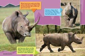 rhino spread 2