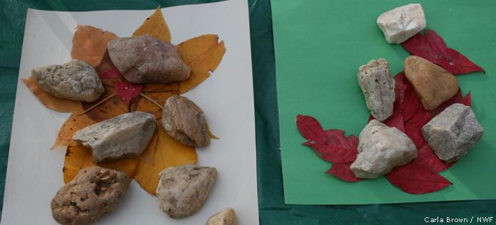 rocks leaf
