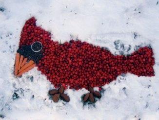 seedy cardinal