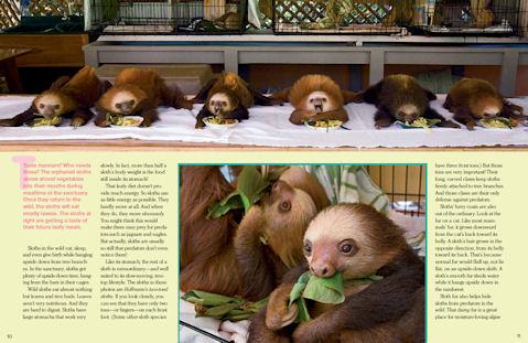 Sloths-3