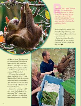 Sloths_4