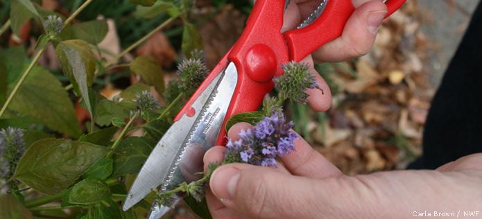 snip flowers