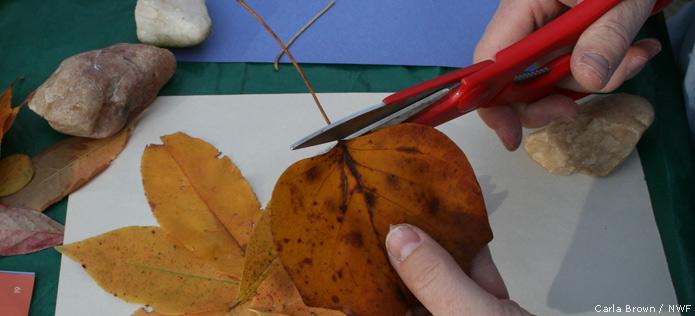 snip leaf