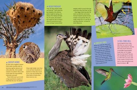 birds spread 3